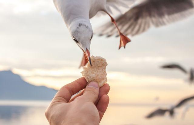 Vogel nimmt Brotstück aus der Hand