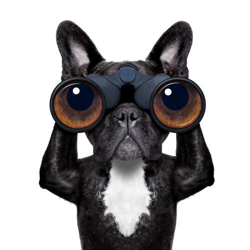 Hund schaut heimlich durch Fernglas